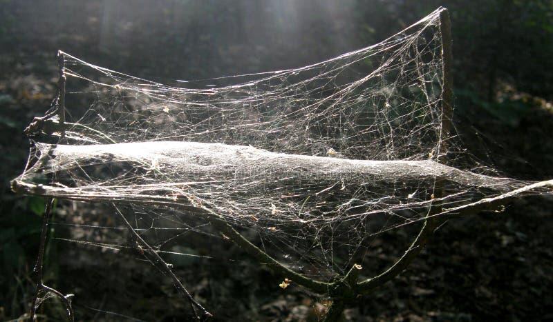teia de aranha densa imagens de stock royalty free