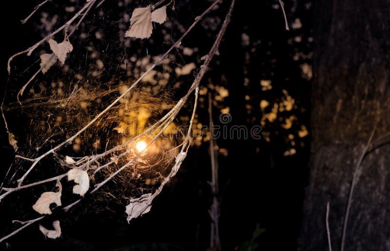 Teia de aranha velha incomum no por do sol com folhas secas imagem de stock