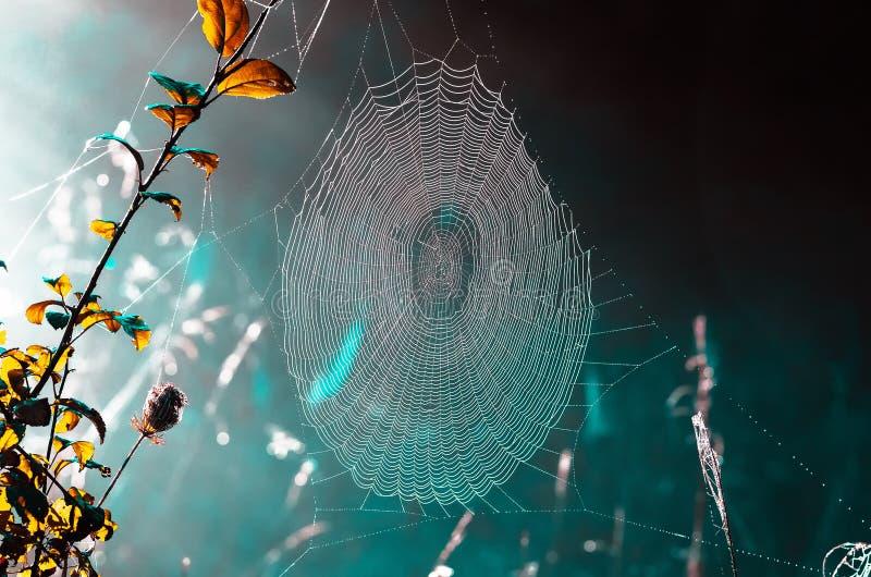 Teias de aranha na grama seca na manhã nevoenta do outono foto de stock royalty free
