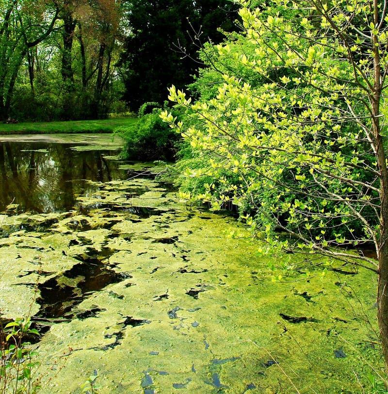 Teich in Frühjahr 3 stockbilder