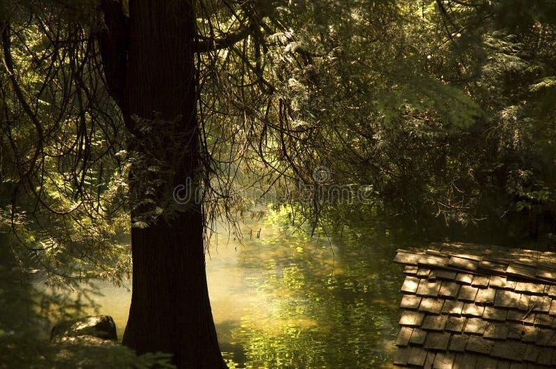 Teich-Reflexionen stockbild