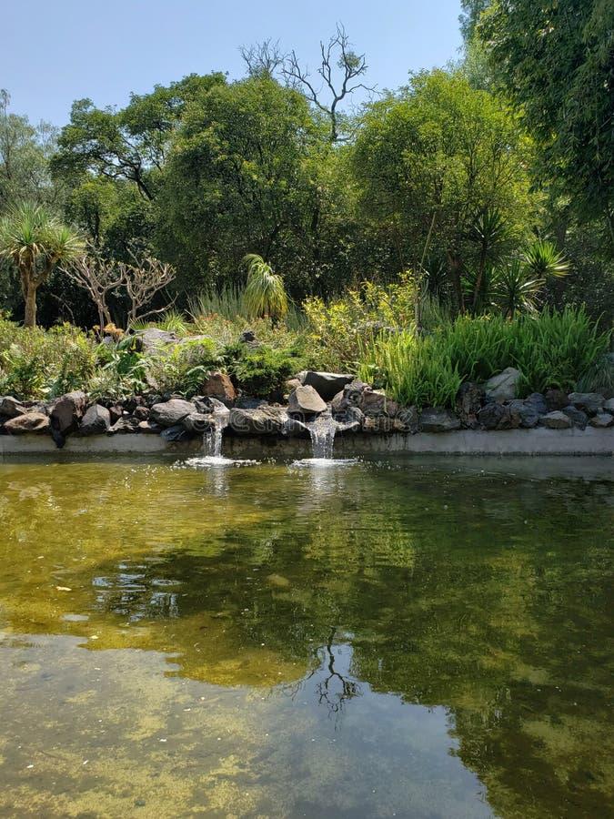 Teich umgeben durch B?ume des m??igen Waldes in einem Park in Mexiko City stockfotografie