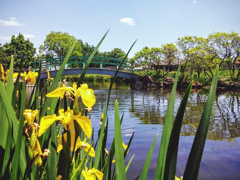 Teich und Brücke stockfotos