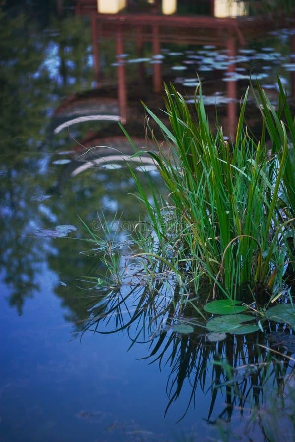 Teichanlagen lizenzfreies stockfoto