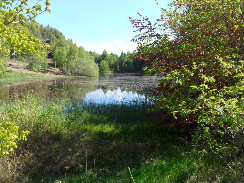 Teichlandschaft mit Bäumen und Büschen in schottischer Landschaft lizenzfreies stockbild