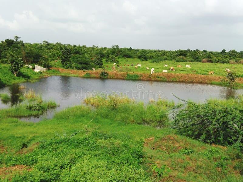 Teichwasser lizenzfreies stockbild