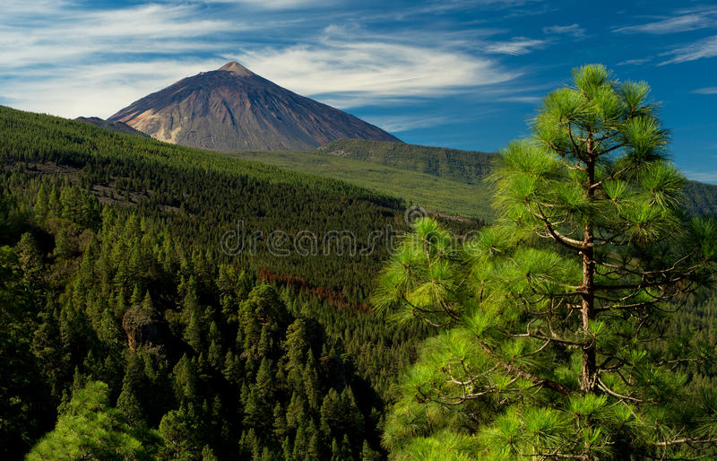 Teide. The majestic summit of the Teide volcano on Tenerife stock images