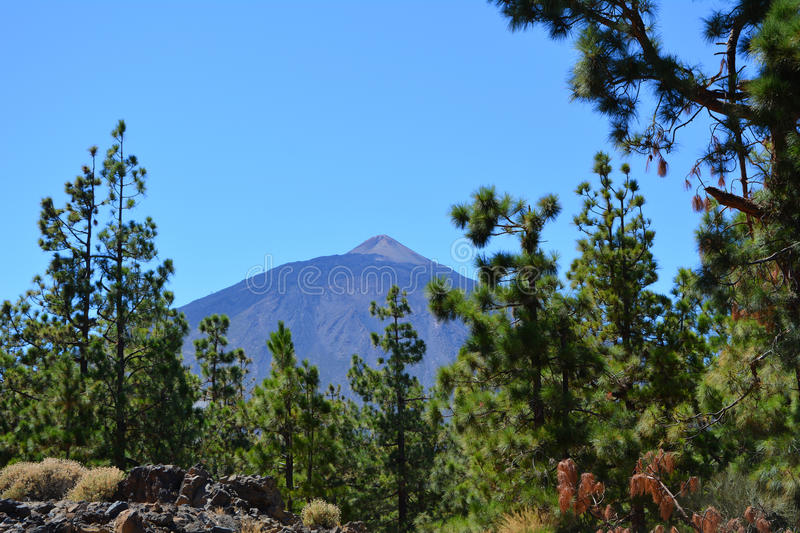 Teide National Park. Tenerife, Canary Islands, Spain stock image