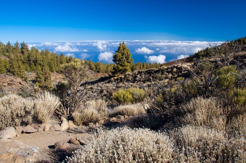 Teide notional park stock images