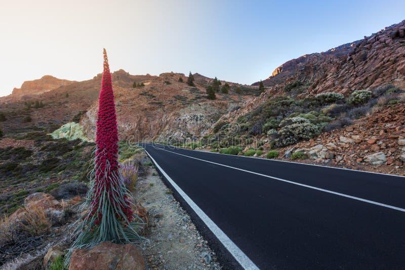 Teide Park Narodowy, Tenerife, Wyspa Kanaryjska, Hiszpania fotografia stock