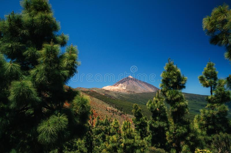 Teide-Vulkan durch Bäume, Teneriffa, Spanien lizenzfreie stockfotos