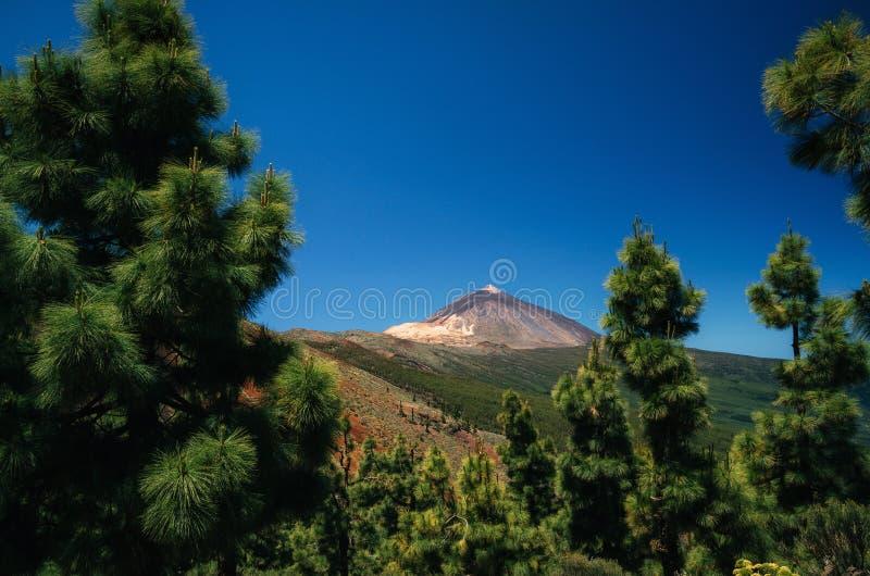 Teidevulkaan door bomen, Tenerife, Spanje royalty-vrije stock foto's