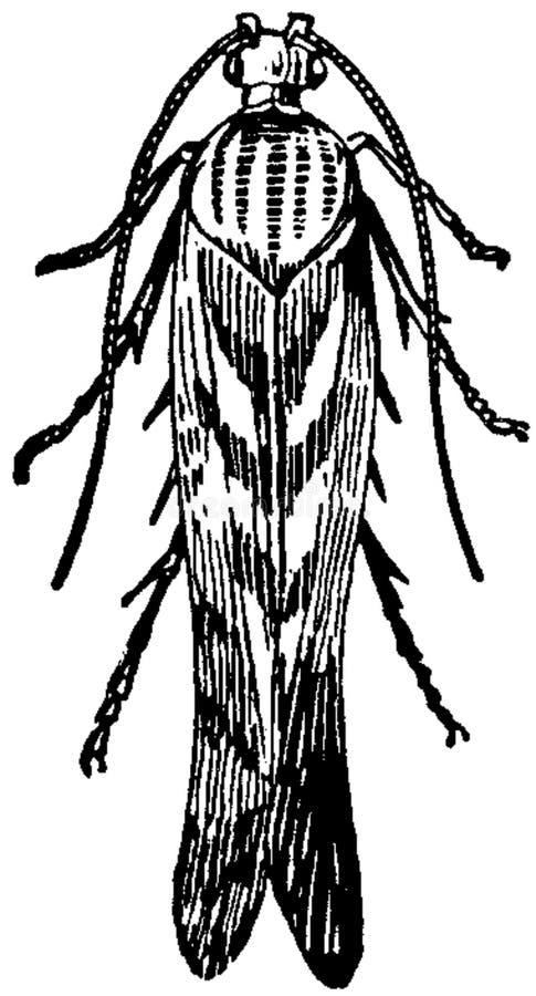 Teigne-3 Free Public Domain Cc0 Image
