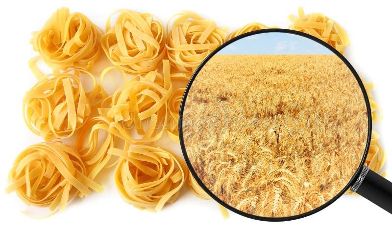 Teigwaren Trockenes ungekochtes Makkaroni und landwirtschaftliches Weizenfeld gezeigt in einer Lupe lizenzfreies stockbild