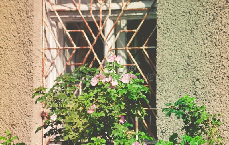 Teil des Altbaus mit den grauen, verfallenen Wänden und einem rostigen Grill auf einem großen Fenster lizenzfreie stockbilder