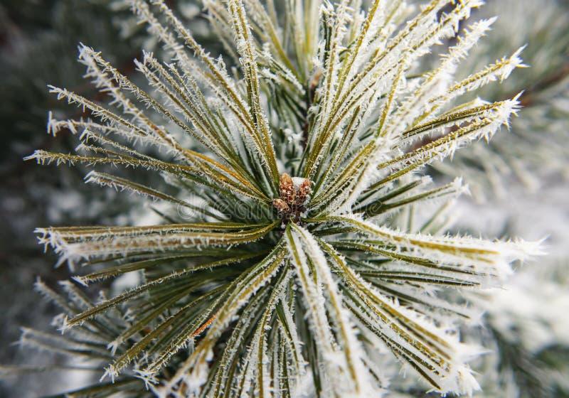 Teil des Tannenbaums mit Schneeflocken lizenzfreies stockfoto