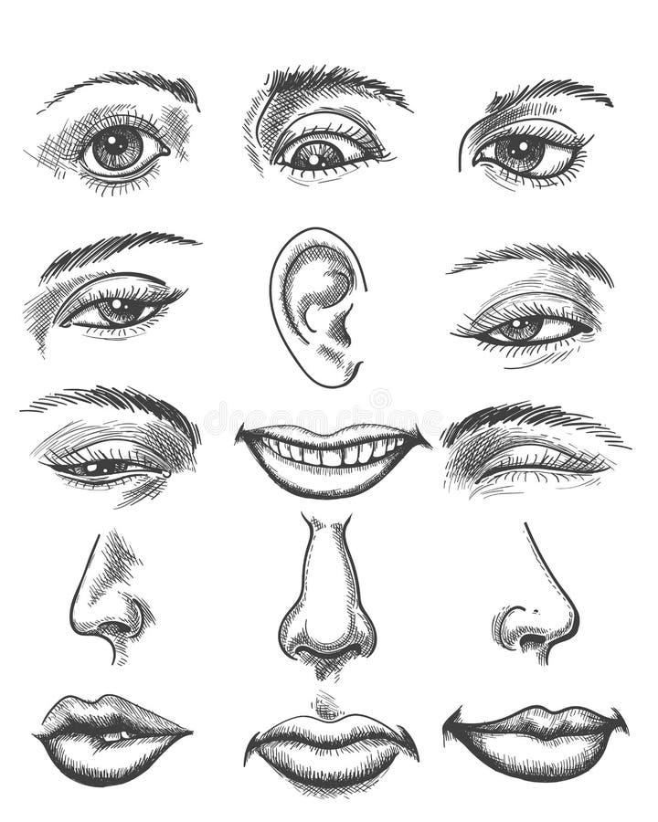 Teile des menschlichen Gesichtes der Weinleseskizze lizenzfreie abbildung