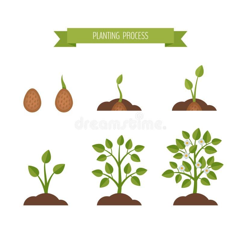 Teilt Pflanzenwachstum in Phasen ein Sprössling im Boden Flache Art, Vektor IL lizenzfreie abbildung