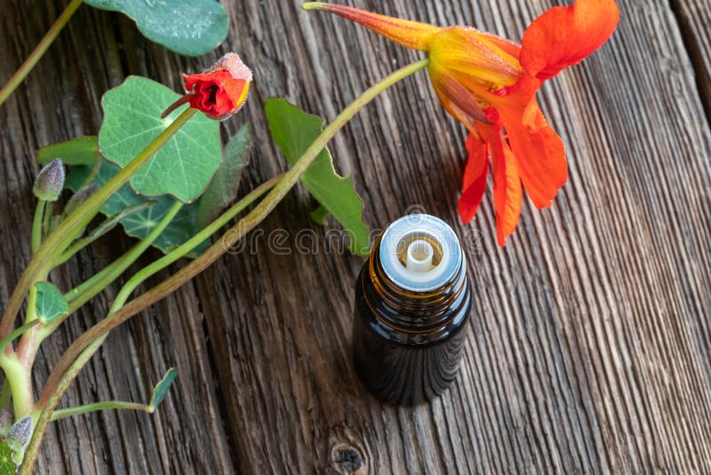 Teinture de nasturce avec les fleurs fraîches de majus de Tropaeolum images libres de droits