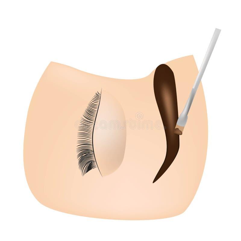 Teinture de sourcil Le maître peint des sourcils avec le henné à une fille, peint avec une brosse dans le salon d'un artiste d'es illustration de vecteur