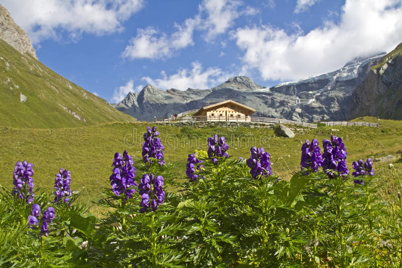 In Teischnitz valley in East Tyrol stock photo