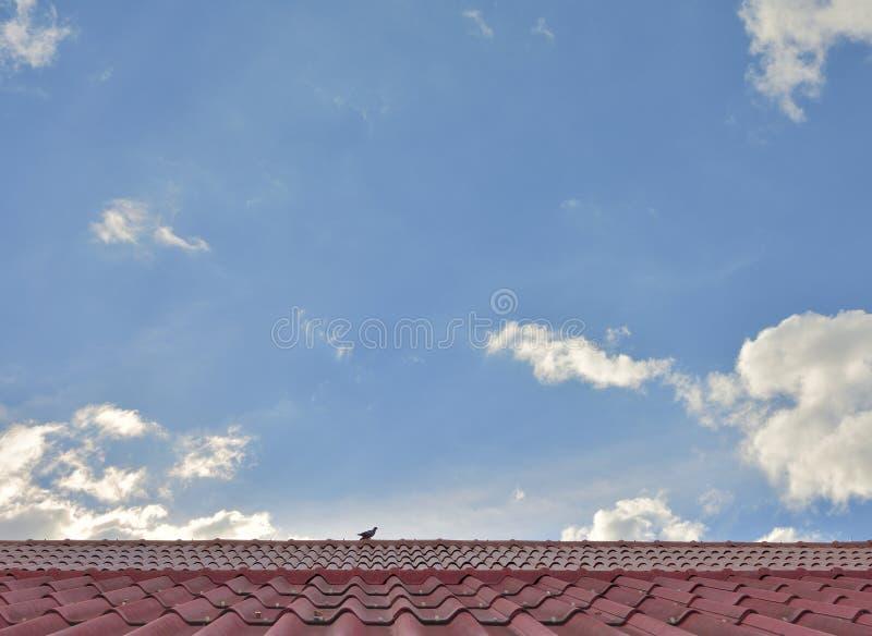 Teja de tejado de la textura en el cielo azul fotos de archivo
