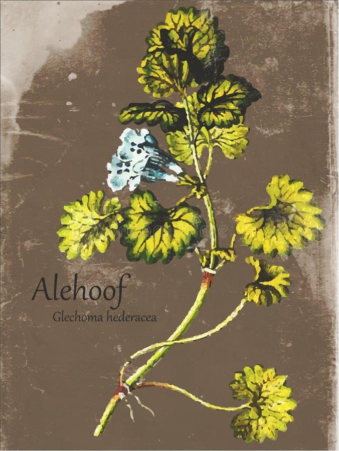 Teja llevada vintage Alehoof de la planta ilustración del vector