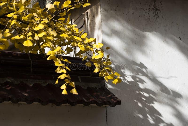 Tejado chino con la hoja de arce imagenes de archivo