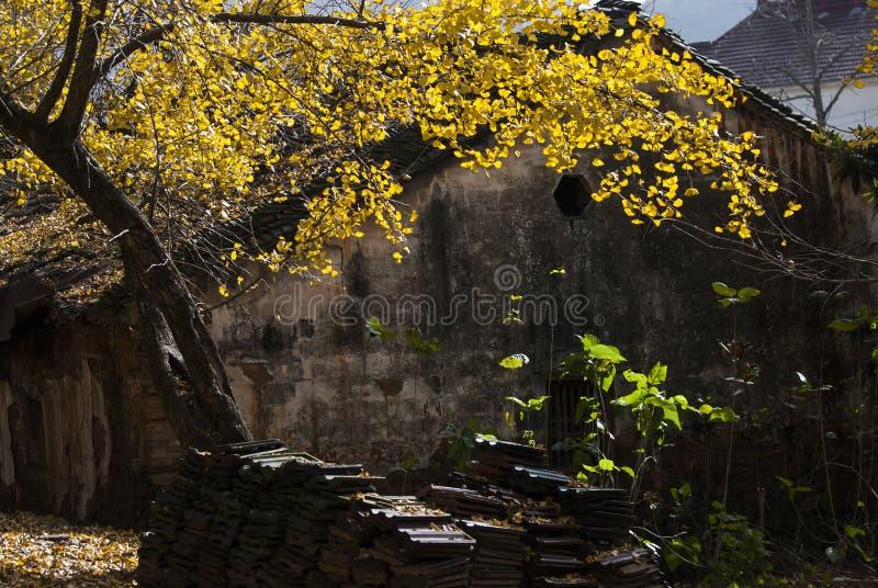 Tejado chino con la hoja de arce foto de archivo libre de regalías