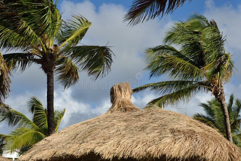 Tejado cubierto con paja del Caribe fotos de archivo