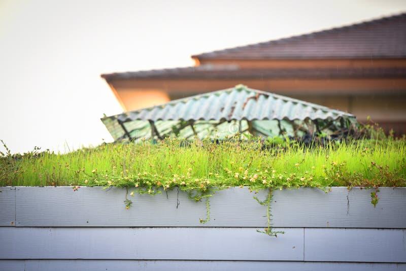 Tejado de la hierba de la planta foto de archivo libre de regalías