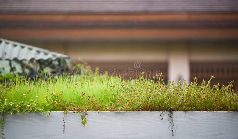 Tejado de la hierba de la planta fotos de archivo