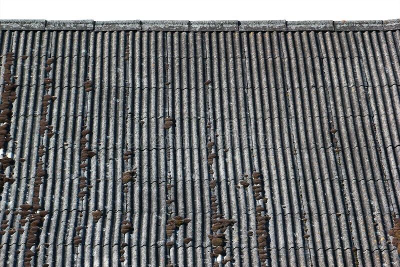 Tejado de pizarra ondulado resistido viejo cubierto con el musgo y los liquenes imagen de archivo