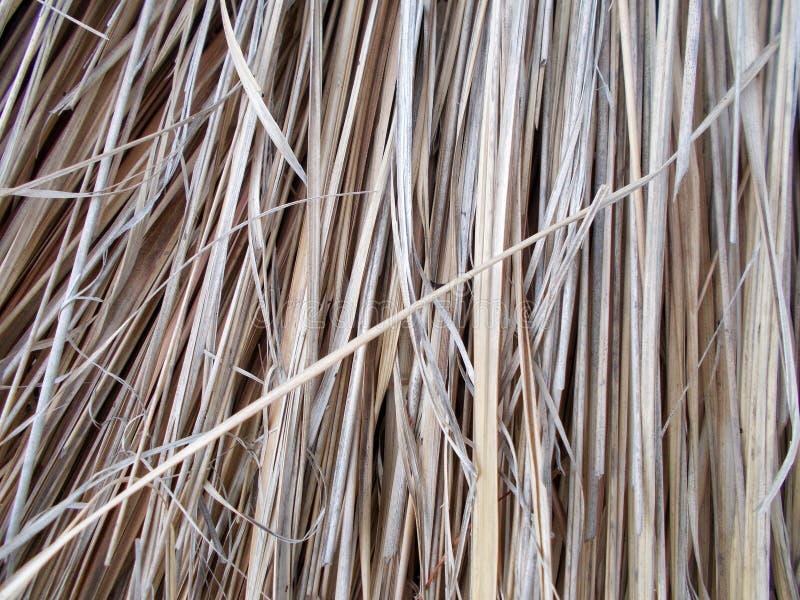 Tejado de Thached cubierto con la paja de lámina seca cutted modelos, detalle imágenes de archivo libres de regalías
