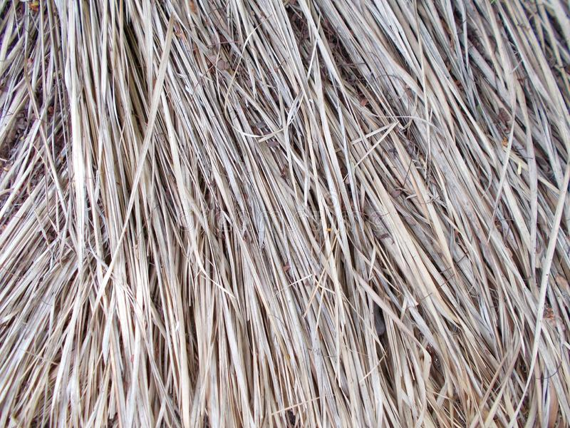 Tejado de Thached cubierto con la paja de lámina seca cutted modelos, detalle fotografía de archivo