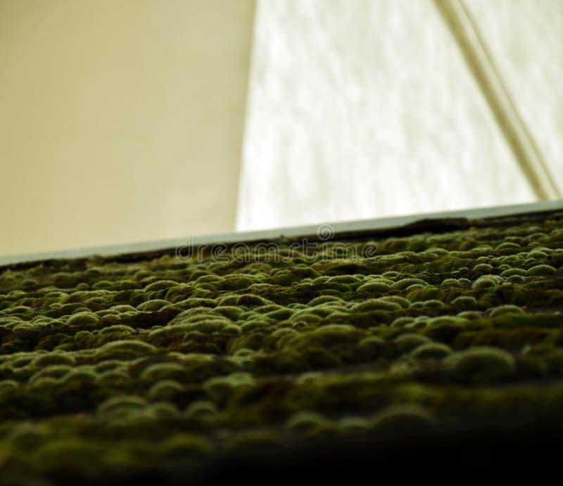 Tejado Moss Landscape en el› Å™ice de LitomÄ imagen de archivo libre de regalías