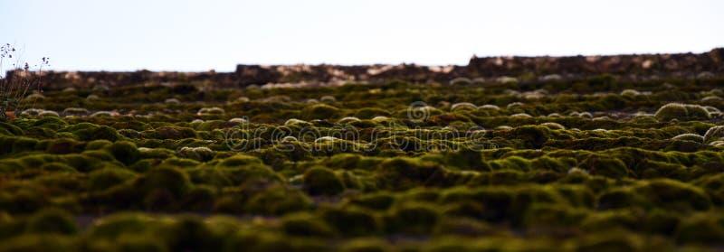 Tejado Moss Landscape en el› Å™ice de LitomÄ fotos de archivo