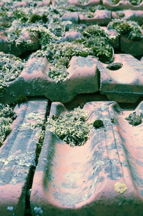 Tejas de tejado viejas de la arcilla con la vegetación del musgo fotografía de archivo libre de regalías