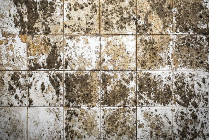Tejas viejas de la pared con el molde foto de archivo libre de regalías