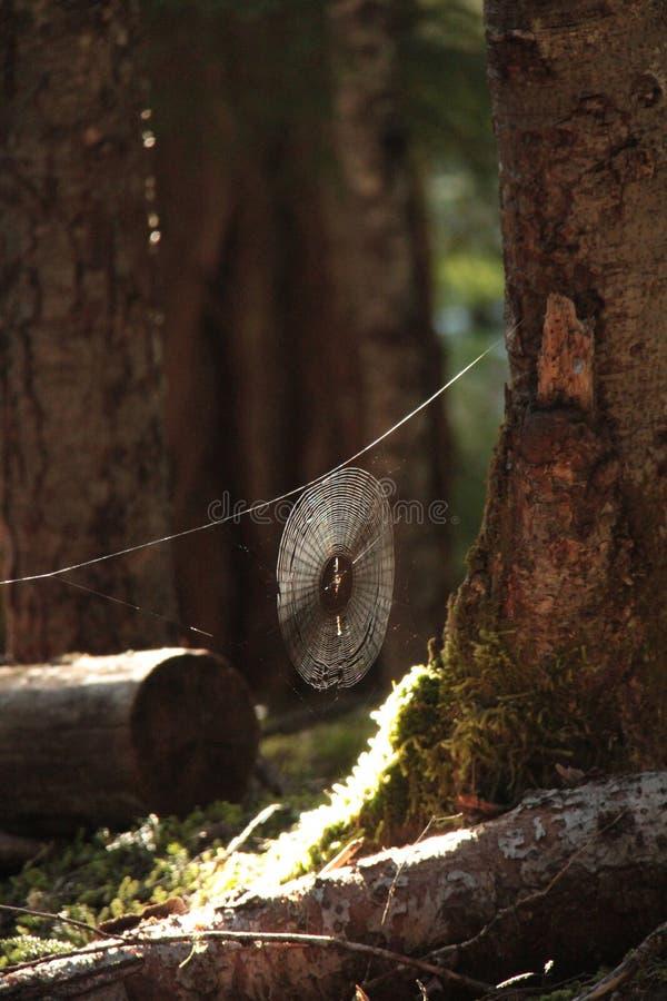 Tejedor en la arboleda fotos de archivo
