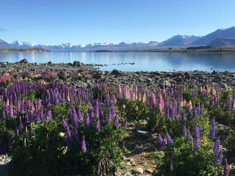 Tekapo湖在新西兰 免版税库存照片