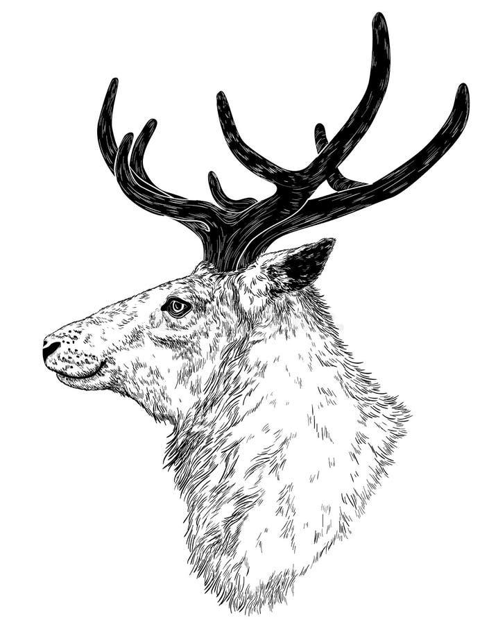 Tekening van wilde herten stock illustratie