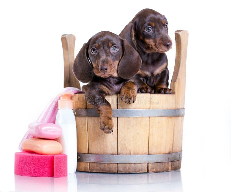 Tekkelpuppy - badtijd stock fotografie