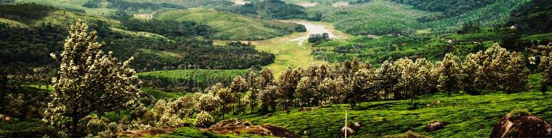 Tekolonier i Munnar, Kerala i Indien med den gröna skogen arkivfoton