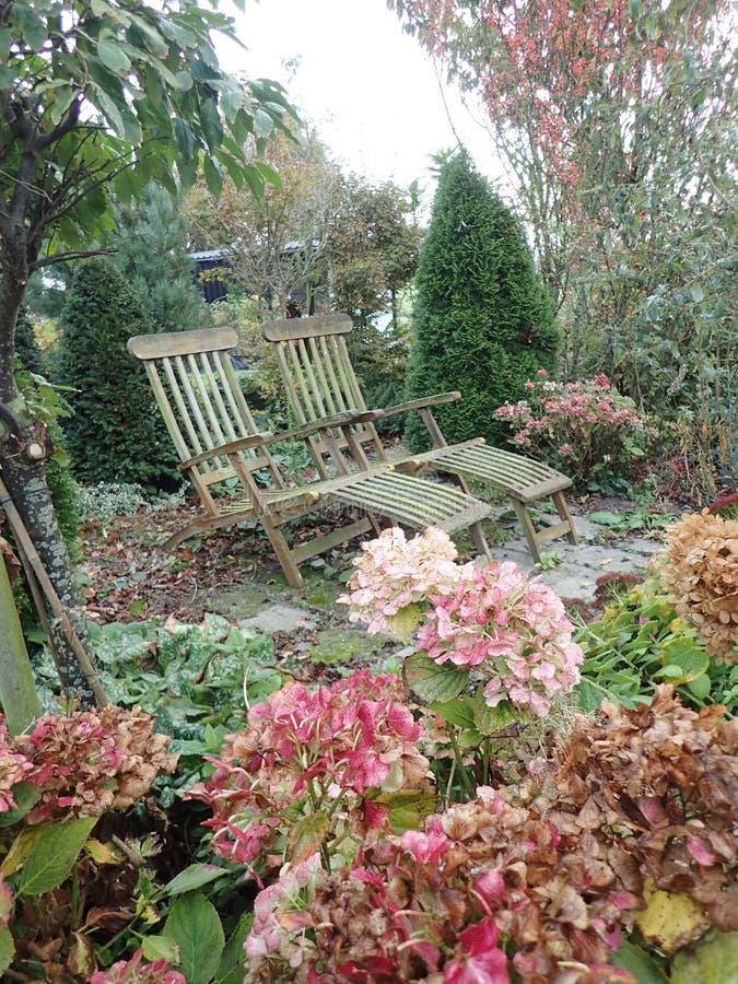 Tekowi drewniani deckchairs w spadku ogródzie obrazy stock