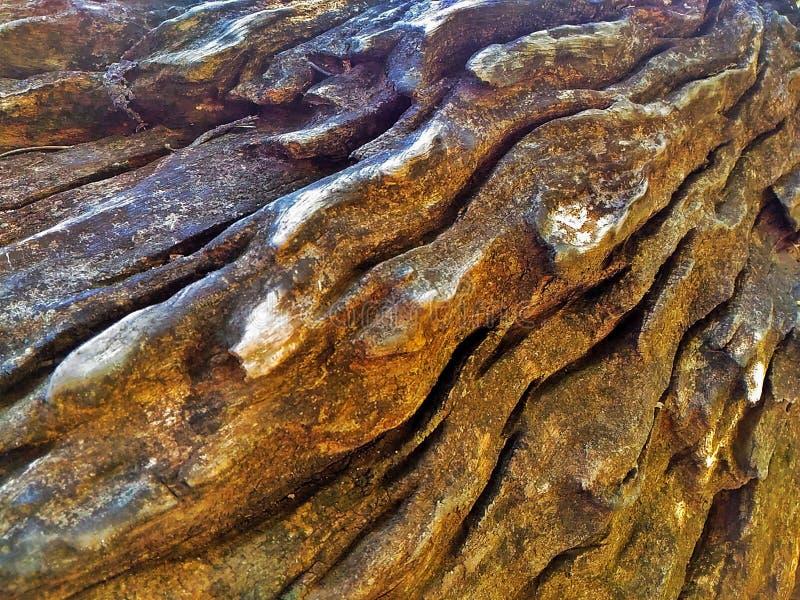 Tekowy drewno fotografia royalty free
