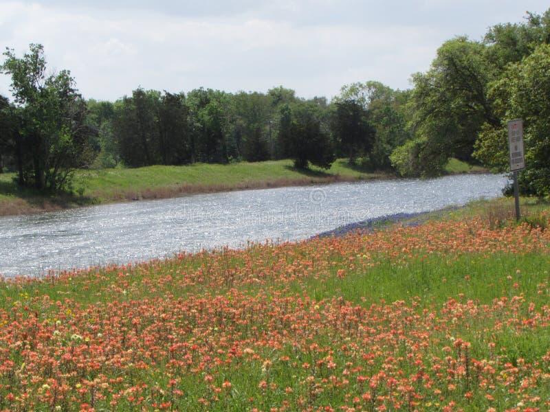 Teksas strumień z wiosen drzewami i kwiatami fotografia stock