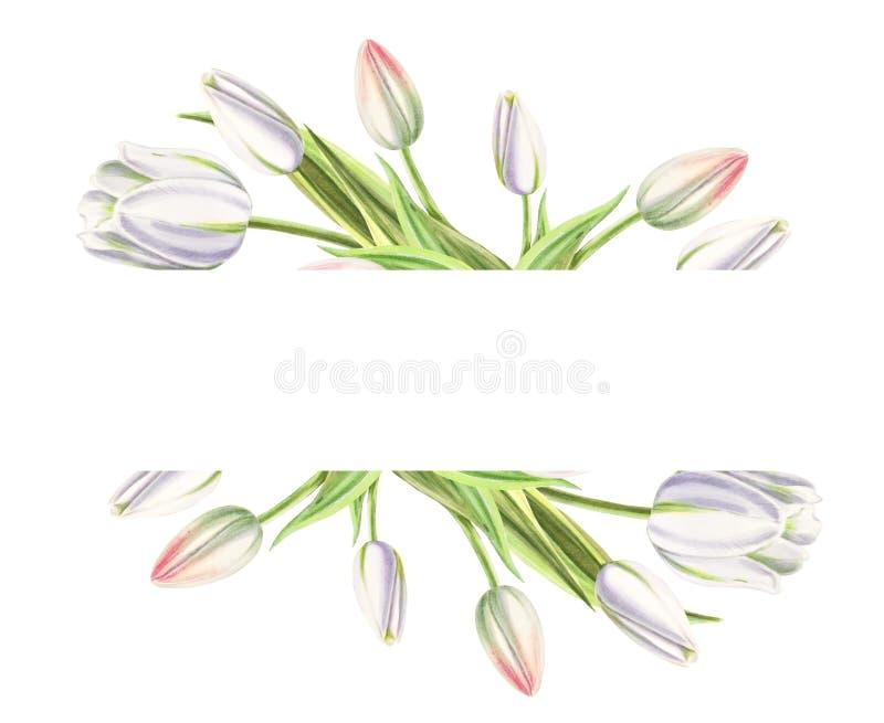 Tekst rama od pięknych białych tulipanów Markiera rysunek adobe korekcj wysokiego obrazu photoshop ilo?ci obraz cyfrowy prawdziwa fotografia stock