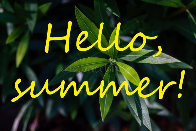 Teksta lato i świezi tropikalni liście na tle CZEŚĆ obrazy stock