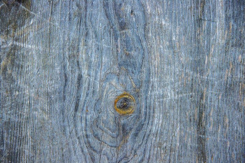 Tekstura błękitna, stary drzewo fotografia royalty free